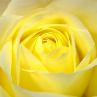 flowers-20348_640